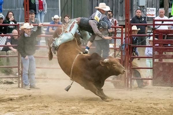 Marshfield Rodeo  2015