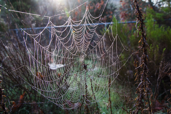 2020-01-24 - Spider Web