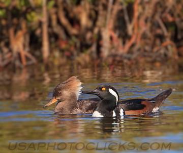 Duck Like
