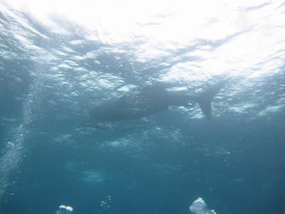 Craig's Diving