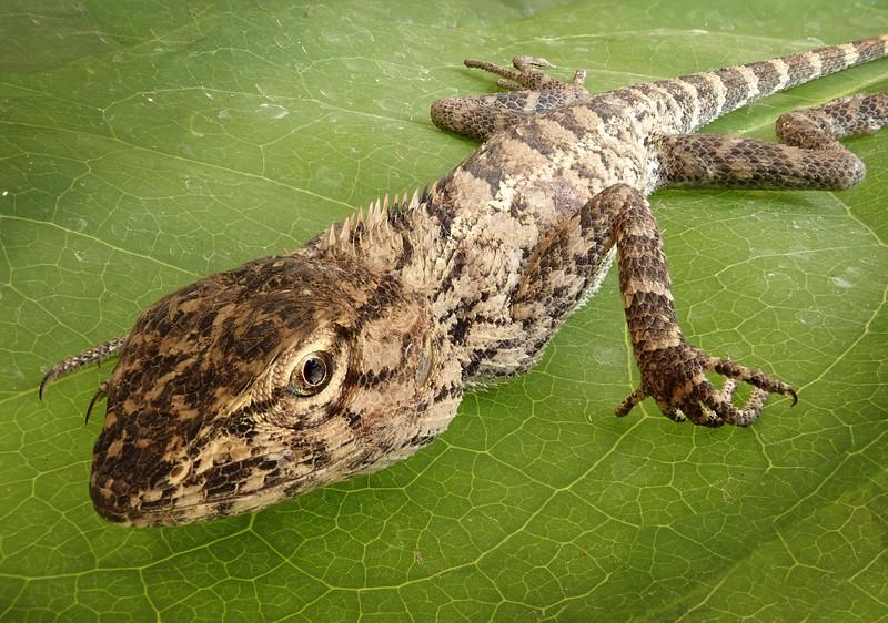 Gecko 158-180.jpg