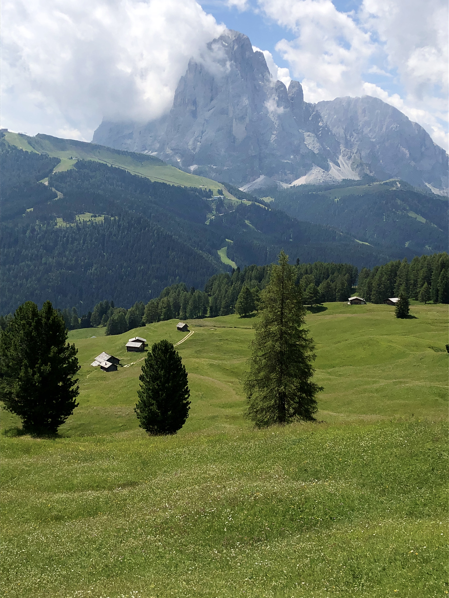 Small farms dotting the high alpine meadow