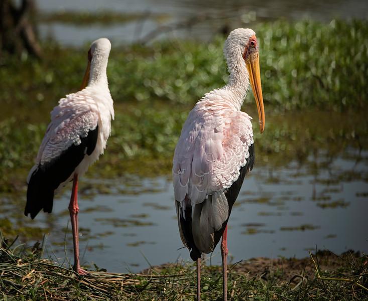 2014-08Aug-Okavango Masters-64-Edit.jpg