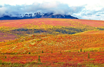 Fall Tundra Colors In Denali National Park