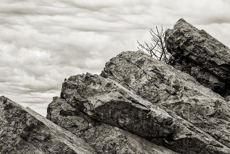 Coyote Hills Chert