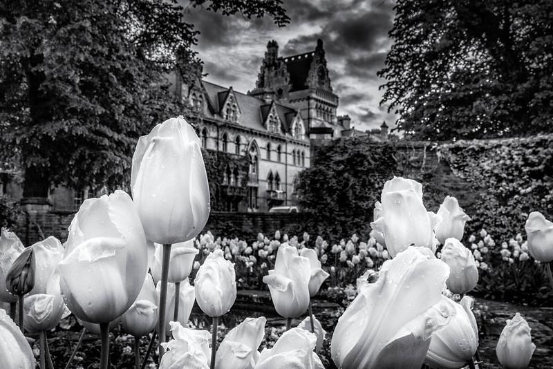 flowersinoxford.jpg