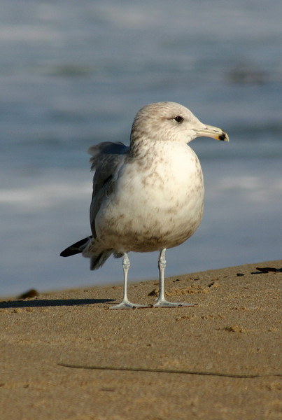 The gull is not impressed.