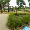 native grasses planting and timber swing and timber topped gabion seating