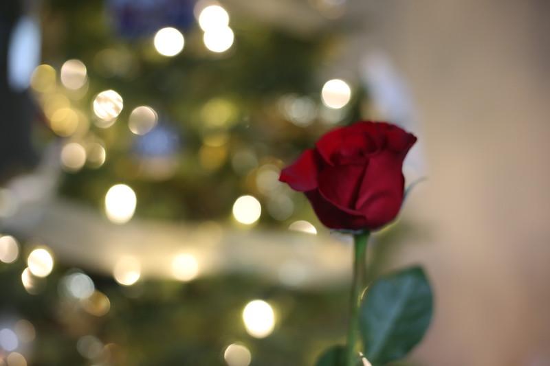 2019-12-22_ChristmasDecor-4390.JPG