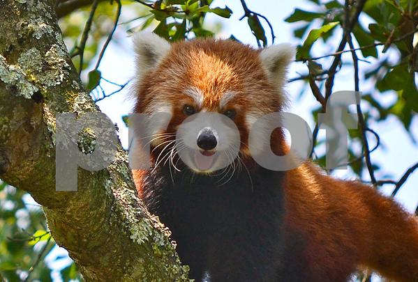 Virginia Zoological Garden, Norfolk