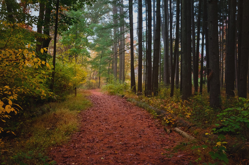 Follow the Red Leaf Path