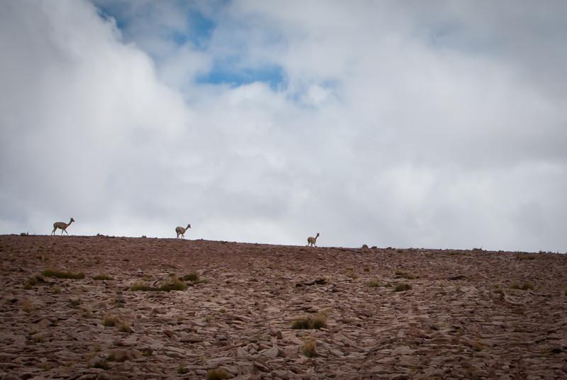 Atacama 201202 Salar de Tara (106).jpg