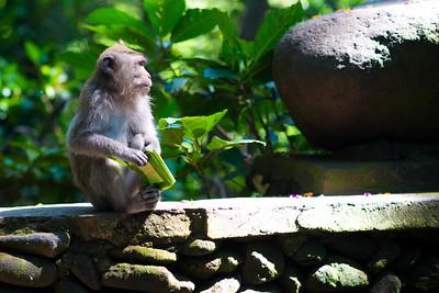Monkey Forrest Ubud Bali Indonesia