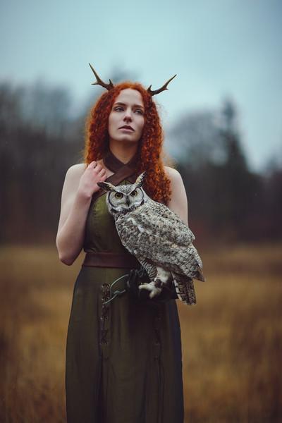 Owls - 2016