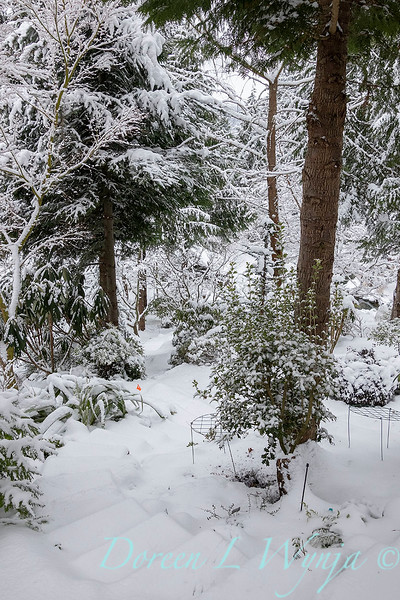 Winter wonderland_8822.jpg
