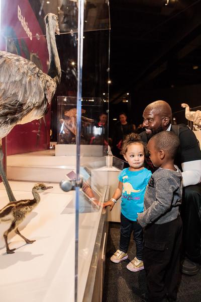 COSI-Dinosaurs-Exhibit-167.jpg