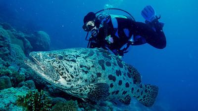 Australia - November 8-18, 2012