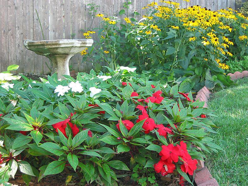 garden-2003-08-0183_std.jpg