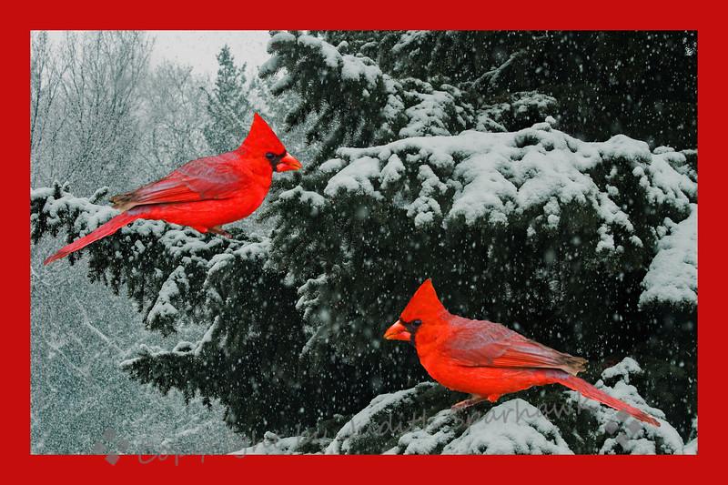 Two Redbirds