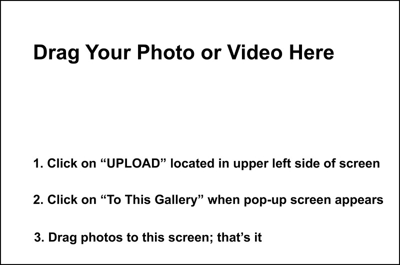 Gallery to Upload Your Photos