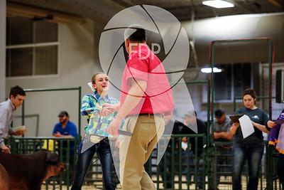 Breeding Show Ring Shots
