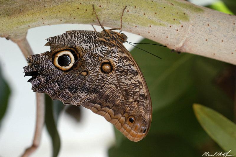 2006 Key West Butterflies DSC_0138.jpg