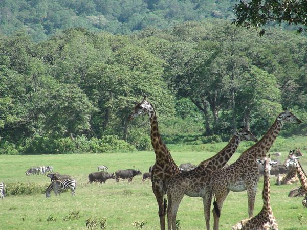 Tanzania Migration (Part 4)