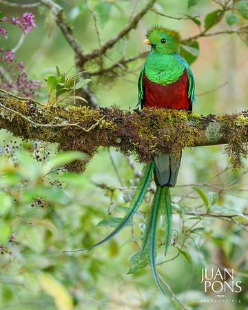 Costa Rica Wildlife Adventure | Photo Workshop