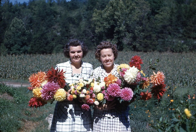 1947 Winnie and Gladys dahlias