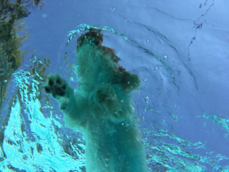 Shoot 1 - underwater