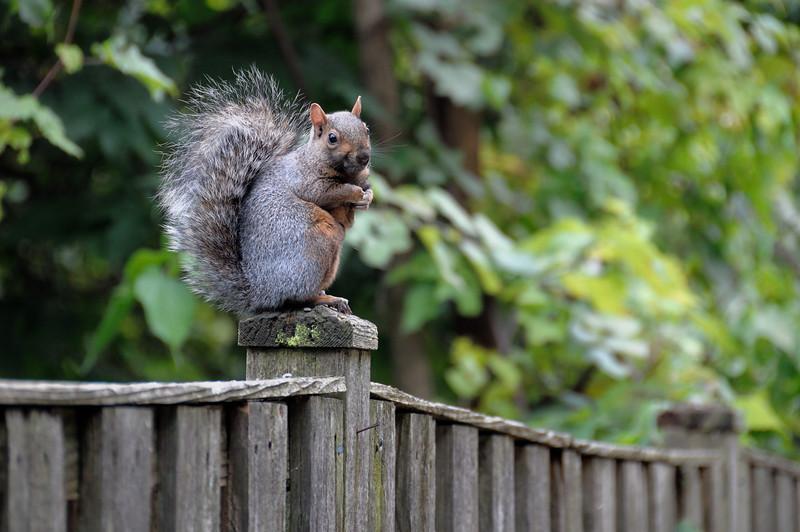 Squirrel. It's a squirrel.