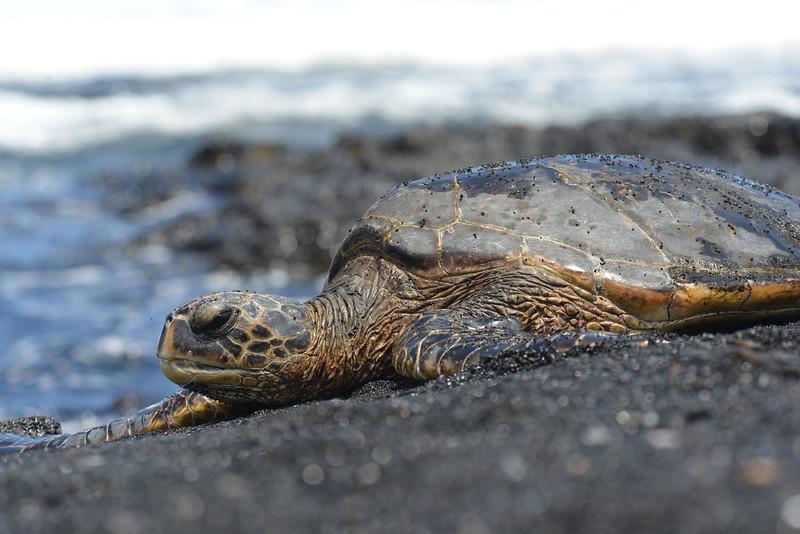 Big Island - Hawaii - May 2013 - 14.jpg