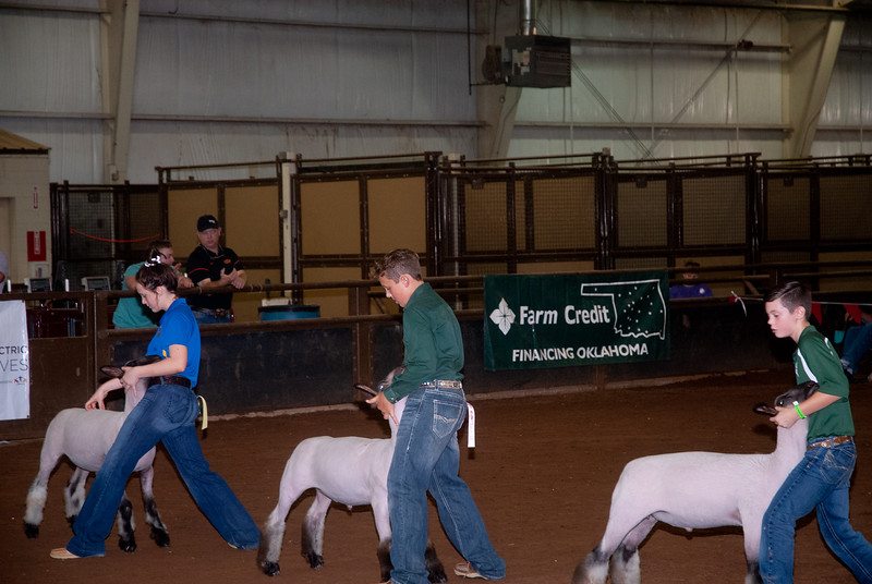 ok_state_fair_20190914_lambs-5.jpg