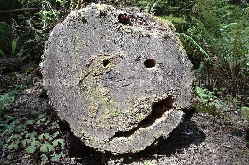 stump face.jpg