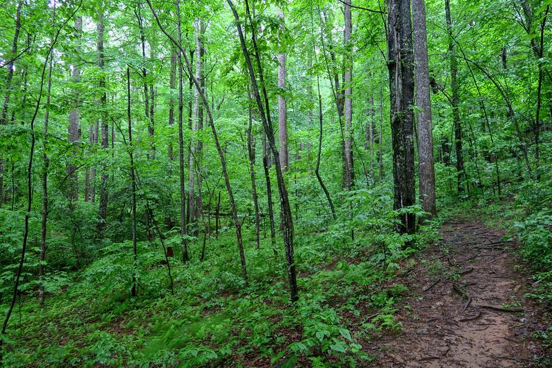 Barnett Branch Trail -- 3,400'
