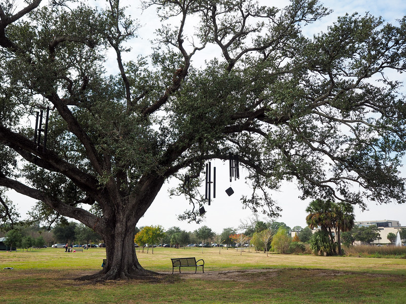 The Singing Oak in New Orleans City Park