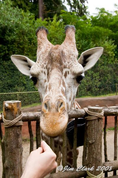 Woodland Park Zoo 09/01/08