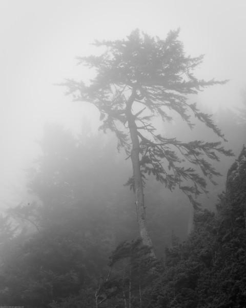 Foggy shore with bent tree on coastal Oregon