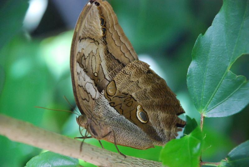 Denver Butterfly Pavilion 2432883384.jpg