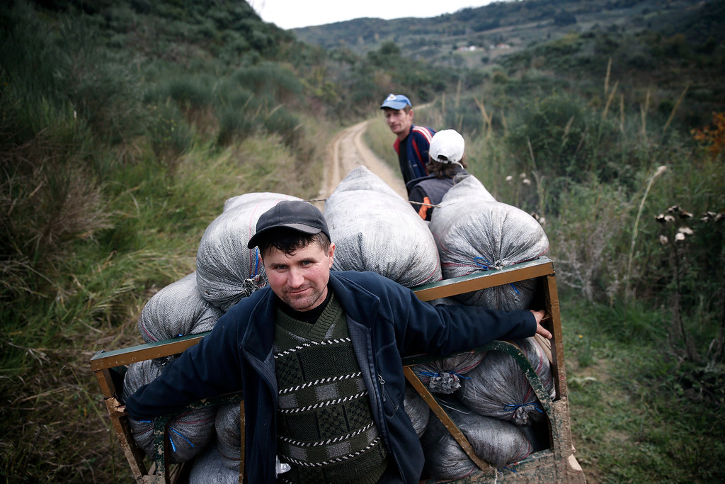 . Workers transport sacks of olives in Anthonas village, about 340 kilometers (211 miles) west of Athens, Greece on Friday, Nov. 29, 2013. Greece is the world\'s third largest producer of olive oil and its leading consumer per capita, with a millennia-old tradition that still serves as a strong link between city dwellers and their rural ancestry. (AP Photo/Petros Giannakouris)