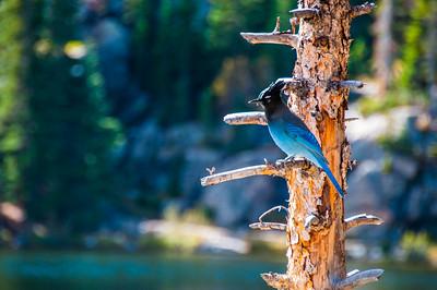 Rocky Mountain National Park/ Estes Park