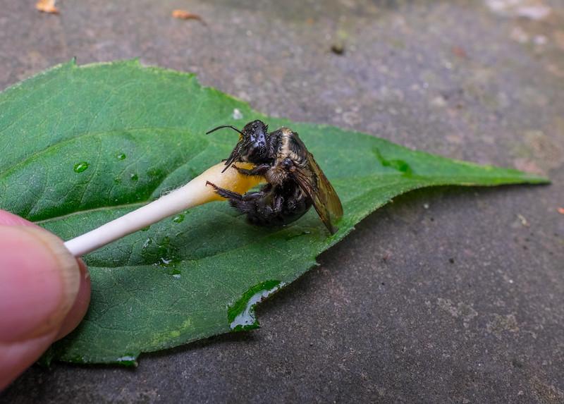 Honey Tip