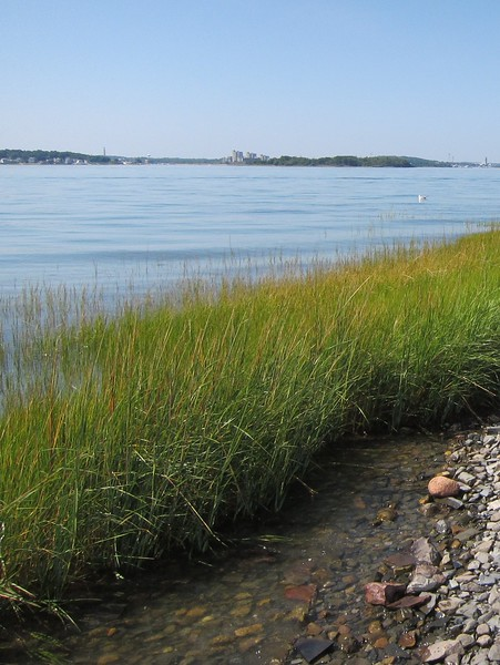 The grassy shore overlooking the water on Bumpkin, one of Boston Harbour islands with great views.