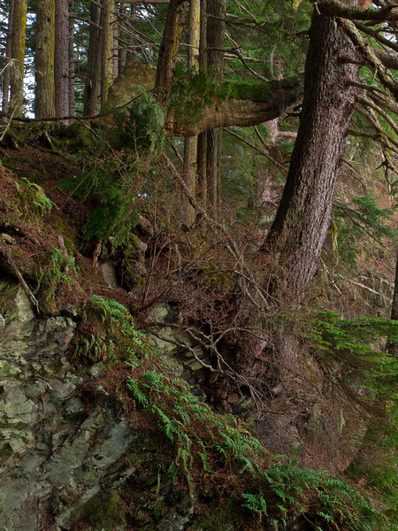 Tangled cliff structure in Auke Rec.