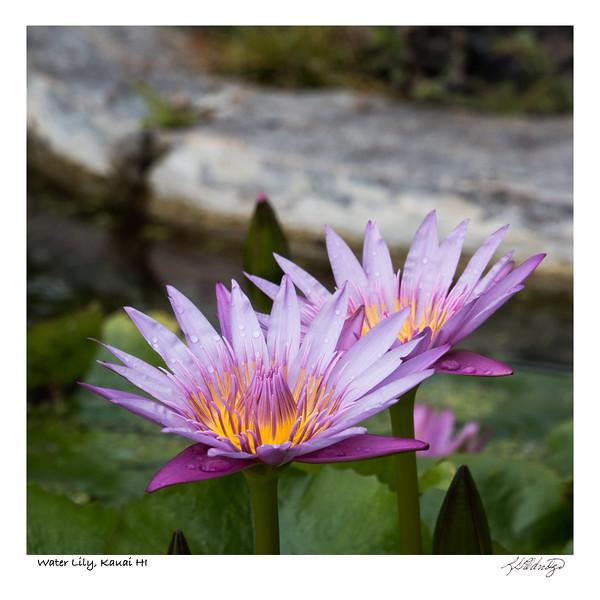 180204_MG_9316 Water Lily Kauai HI.jpg
