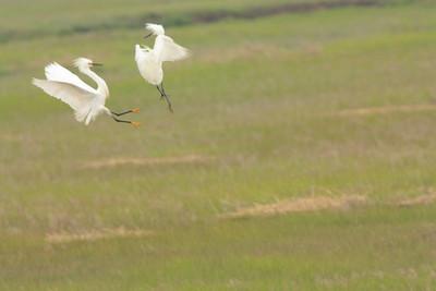 Forsythe National Wildlife Refuge May 15 2011