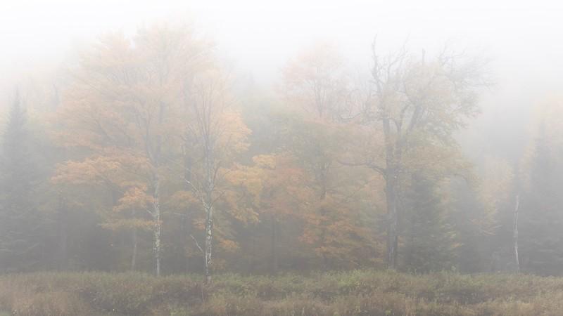Sudden Fog