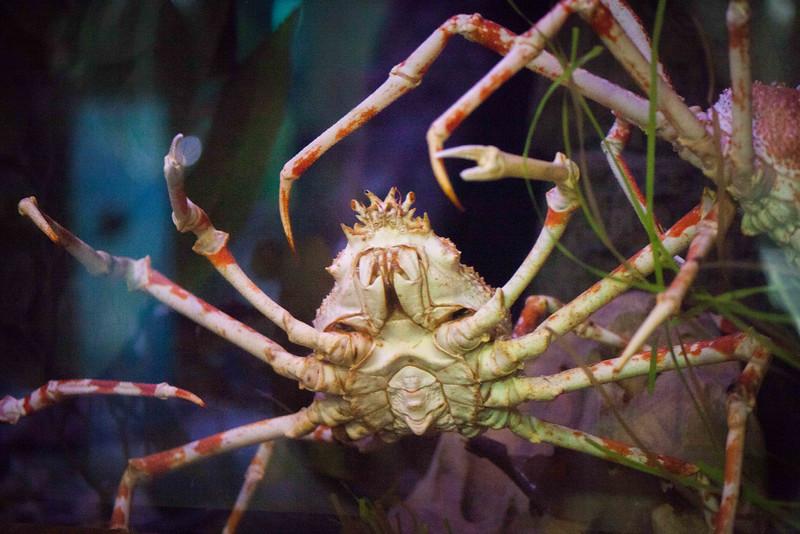 2014 10 25 Dallas World Aquarium-46.jpg