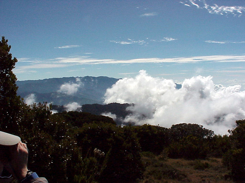 Cerro de la Muerte Costa Rica 2-15-03 (50898085)