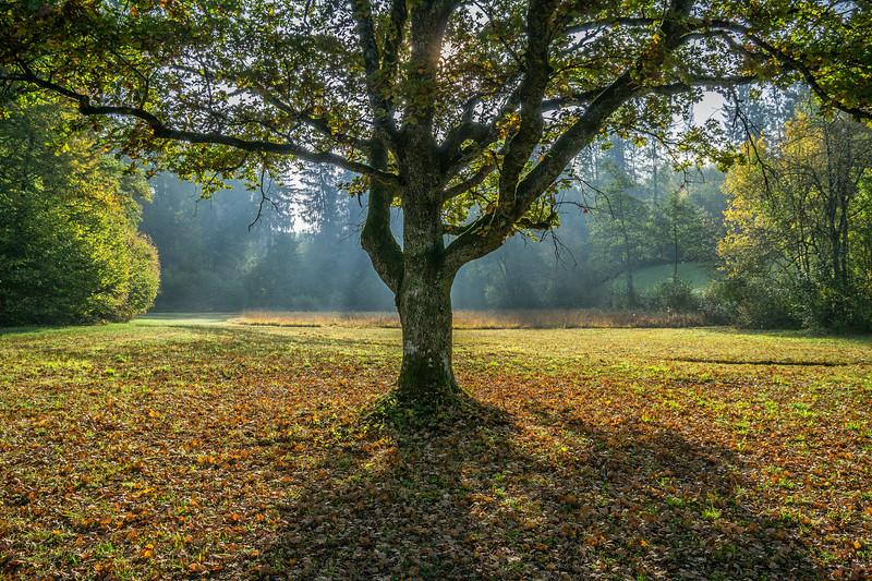 Waldlichtung bei Affoltern a.A.